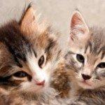 Kat, Katten, kittens