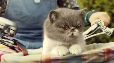 10 beste reclamefilmpjes met katten in de hoofdrol