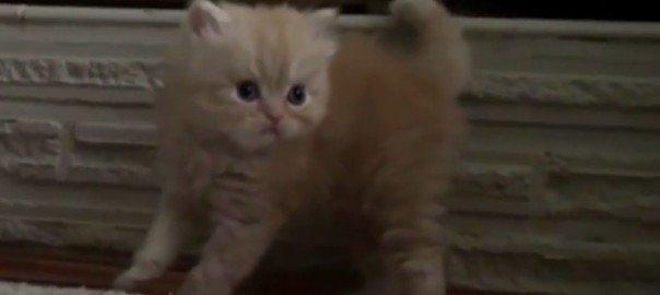 De mooiste kittens