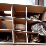 Oude dozen maken je kat blij