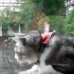 Wat doet een kat bij regenweer