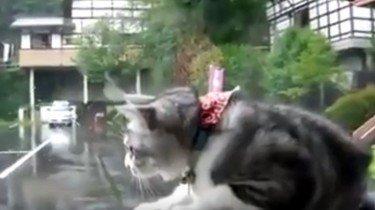 kat vangt ruitenwisser