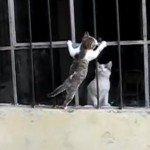 Moederliefde tussen mama en kitten