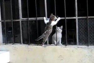 moederliefde tussen kitten en moeder