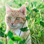 7 hippe kamerplanten die giftig zijn voor je kat